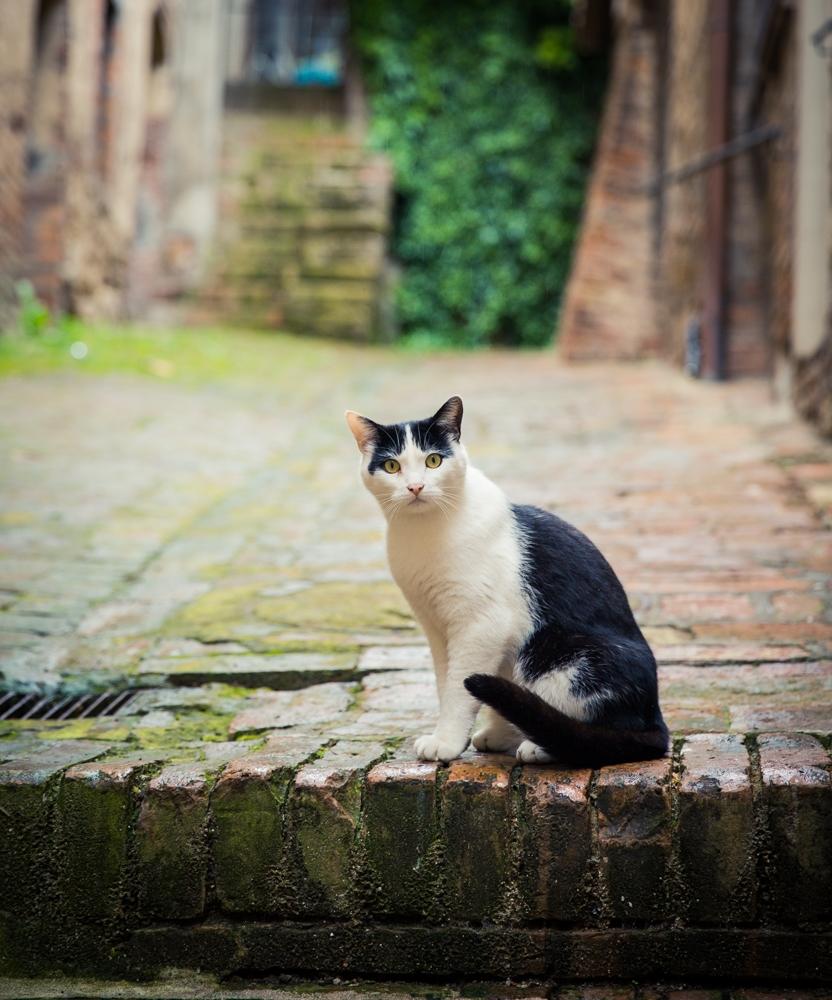 tuscany_2473-2
