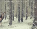 marina-gondra-fotografo-barakaldo-bizkaia-bilbao-vizcaya-photoshop-fotomontaje-ciervo-deer-whisper-susurro-forest-bosque