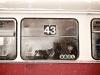 Linie 43
