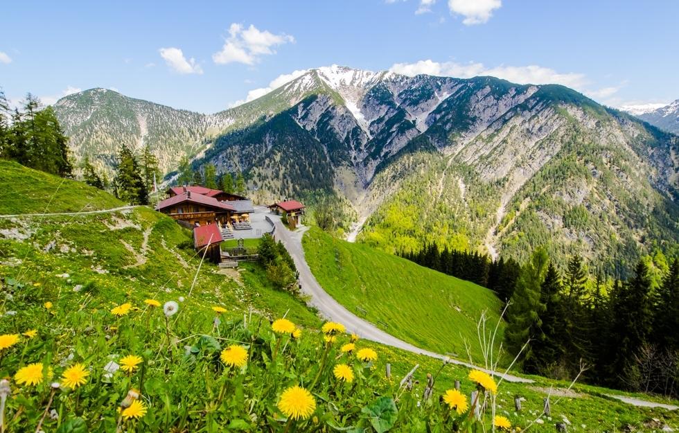 Bergwiesen