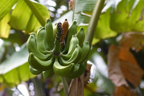 botanisch7.jpg
