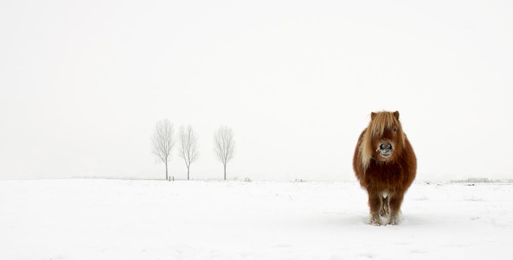 ©Gert Van Den Bosch, Netherlands, Winner, Open Nature& Wildlife, 2014 Sony World Photography Awards