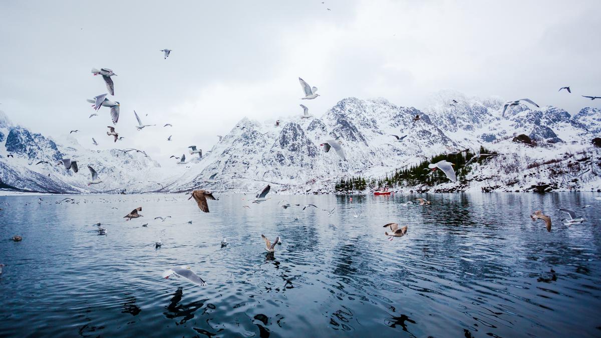 Lofoten_Norway